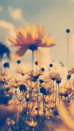 30 ideas for sunflower wallpaper vintage iphone Wallpaper For Your Phone, Of Wallpaper, Nature Wallpaper, Wallpaper Backgrounds, Wallpaper Quotes, Vintage Phone Backgrounds, Iphone Background Vintage, Spring Wallpaper, Iphone Backgrounds