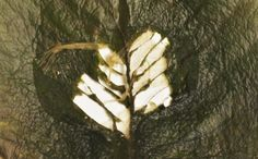Manifiesto Natural / Proceso de trabajo. Acá les dejo una muestra de mi corazón Frank Bready Trejo/2014