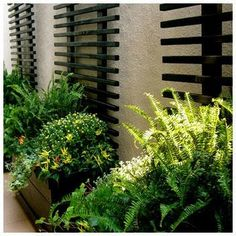 50 Modern Front Yard Designs and Ideas- 50 Modern Front Yard Designs and Ideas Japanese style box gardening A black and green combination is interesting and dramatic. The black makes the green fresher and more alive. Modern Front Yard, Front Yard Design, Landscape Design, Garden Design, Garden Trellis, Wall Trellis, Diy Trellis, Trellis Design, Herbs Garden