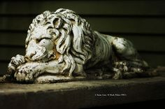 Mark Fisher American Photographer™: A Stone Lion  • American Photographer Mark Fisher ...