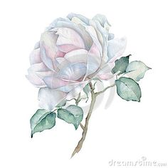Hand drawn watercolor floral bouquet isolated on white background. White rose. Great for creating vintage designs or wedding and greeting cards