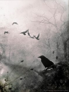 "Other friends have flown before — On the morrow he will leave me, as my hopes have flown before."" Quoth the raven, ""Nevermore.  Edgar Allan Poe, The Raven"