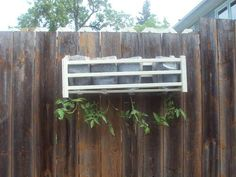 "Instructions for making a recycled milk jug ""topsy turvy  planter"" for your tomatoes to hang on your fence!"