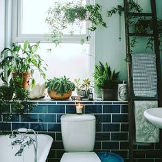 "91 Likes, 6 Comments - The Dream Catcher (@dreamcatcherinteriors) on Instagram: ""•I D E A S • Bathroom Plants If you don't have the patience to look after indoor plants now during…"""