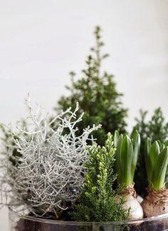 Trend Alert: 13 Beautiful Blooming Bulbs, Scandi Edition