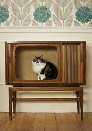 Afbeeldingsresultaat voor cat house diy