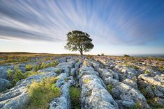 England in Pictures: 20 Beautiful Places to Photograph | PlanetWare Pictures Of England, Picture Tree, Yorkshire Dales, British Isles, Great Pictures, Beautiful Places, Location History, Country Roads, London