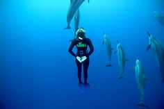 free diving with dolphins