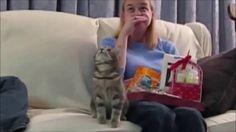 Cat fun love kitty video - Cat Home Video