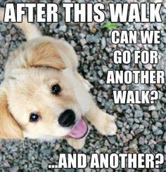 Please, please, I love dog walks!