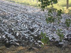 Zeekleilandschap. Zie jij waar gebieden met zeeklei in de grond voor gebruikt worden?