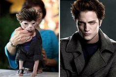 Someone dressed their hairless cat to look like Robert Pattinson from Twilight... who are these people?? laylagranata