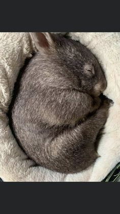 Animals And Pets, Funny Animals, Cute Animals, Australia Animals, Capybara, Quokka, Wombat, Aussies, Animals Beautiful