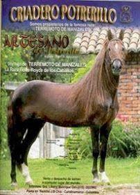 CABALLOS COLOMBIANOS: CABALLOS HISTORICOS DEL PASO FINO COLOMBIANO Beautiful Horses, Horses, Horse Breeds, Factory Farming, Animales, Hair Style, Culture, Make Up, Pretty Horses