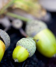 Awesomely colored Acorns