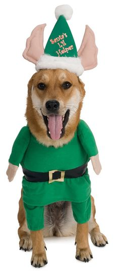 Pets Christmas Costumes Santa's Elf Costume HalloweenCostumes4u.com $14.25                                                                                                                                                                                 More