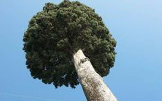 Τo οριζόντιο ύψος Herbs, Herb, Medicinal Plants
