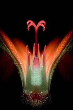 Geranium flower | 2005 Photomicrography Competition | Nikon Small World