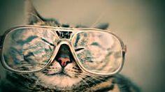 Kitty glasses