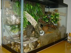 Using plexiglass to keep the sand out of the pools in the crabitat