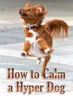 How to Calm a Hyper Dog #dogtrainingtips