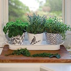 Hinchcliffe & Barber Songbird Herb Pots