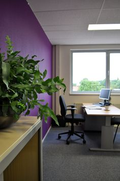 paars kantoor | purple office
