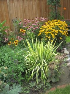 GARDENING: Caring for plants in a heat wave