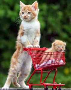 Cute kitten in the trolley. The face it all. Level 7