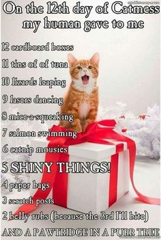 Ha ha! Cat's version of the 12 days of Christmas!