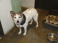 My name is Peabucky. I am a senior Heeler who was removed from my family due to neglect. I am an older girl who is very quiet and well behaved. I need a retirement home filled with love to live out my golden years. BELMONT COUNTY ANIMAL SHELTER 45244 National Road West Saint Clairsville, OH 43950