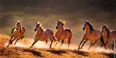 Άλογα που καλπάζουν