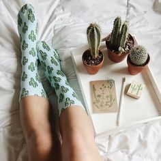 Types of Houseplant Bugs and Methods to Check Their Infestation Sundaze Ttothen Echeveria, Cactus Decor, Cactus Y Suculentas, Green Life, Cacti And Succulents, Botany, House Plants, Planting Flowers, Flamingo