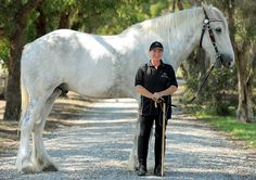world's tallest horse - can I have him - Please?