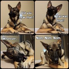 I <3 my German Shepherd. She's so entertaining haha.