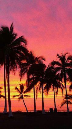 A beautiful sunset wallpaper Tumblr Backgrounds, Aesthetic Backgrounds, Aesthetic Wallpapers, Wallpaper Backgrounds, Palm Tree Iphone Wallpaper, Sunset Wallpaper, Tumblr Wallpaper, Palm Trees Tumblr, Photo Ocean