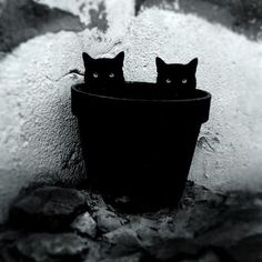 Apparently the portal to Hell is in a flower pot?