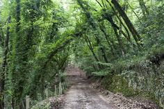 Exploring Foresta Umbra, the shady forest of Gargano, a protected area of great natural beauty, among century-old trees and birdsong.