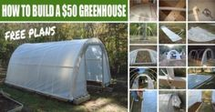 How to Build a $50 Greenhouse- Free Plans---Boy-oh-boy... maybe one of these days :-D