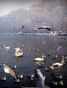 The Lake of Ioannina in winter, Epirus, Greece Greece Itinerary, Greece Travel, Best Greek Islands, Greek Island Hopping, Scenery Pictures, Greek Isles, Cruise Destinations, Winter Travel, Adventure Is Out There