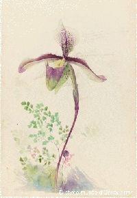 Émile Gallé (1846-1904) - Lady's Slipper Flower Study for Inlay Work. Pencil & Watercolour on Paper. Nancy, France. Circa 1897. 49.4cm x 32cm. Musée d'Orsay, Paris, France.