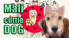 JELLY✞PEACH introduce Mali the Cuttie Dog  #jellypeach #youtubergirl #tumblrgirl #cute #dog