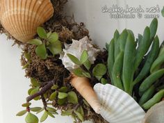 Make A Beachy Succulent Wreath