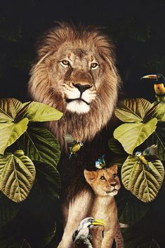Beautiful Cats, Animals Beautiful, Baby Animals, Cute Animals, Lion Pictures, Cool Art Drawings, Animal Posters, Animal Control, Animal Wallpaper