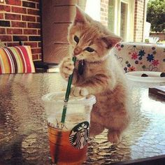 #lovely #cat #cute #animal