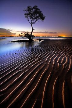 Sunset Mangrove, Moreton Bay, Brisbane, Queensland, Australia