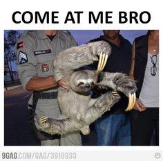 The Ninja Sloth