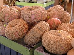 Peanut Pumpkin or galeux d'eysines an old heirloom french variety. I love them.