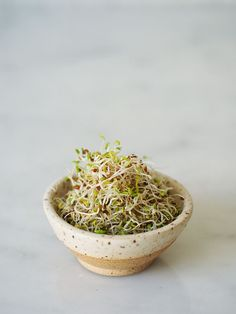 Essential Sprouting Guide by Ashley Neese. #sprouting #health #wellbeing