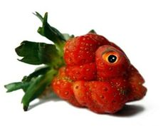 GM Fish-Strawberry